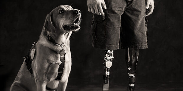 Dog Days of Summer – Tribute to Service Dogs